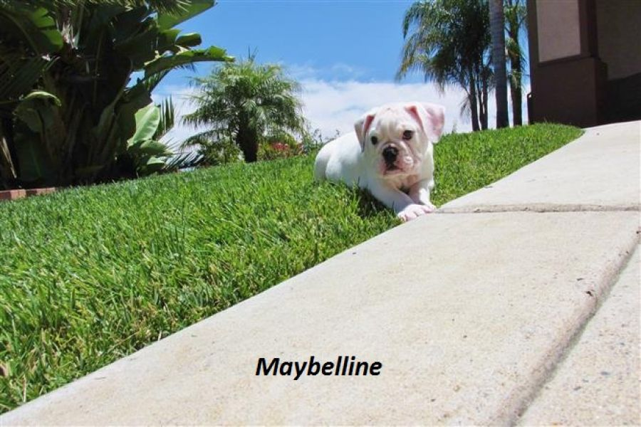 Maybelline and muffy